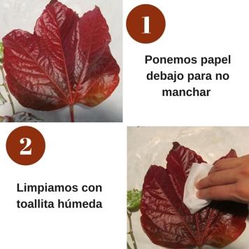 hojas_otoño1